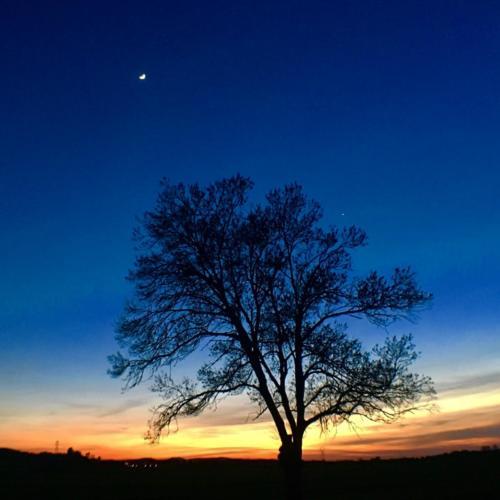 un arbre et un ciel bleu à Château la Bastide
